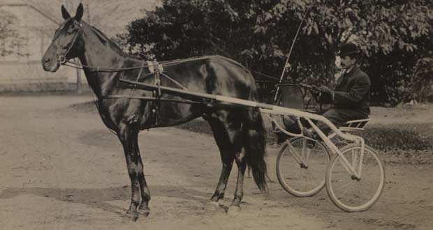 Dan patch racehorse