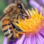 5 Reasons You Should Be Worried About Declining Bee Populations