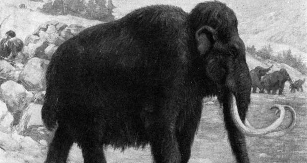 The Top 5 Best Known Extinct Animals